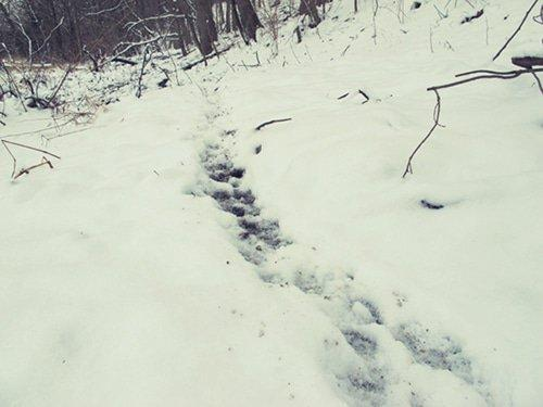 game-trail-snow-2